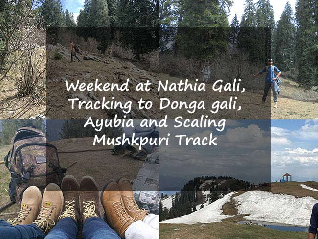 Weekend at Nathia Gali, Tracking to Ayubia from Donga gali and Scaling to Mushkpuri Top